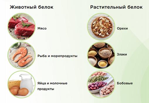 животный и растительный белок
